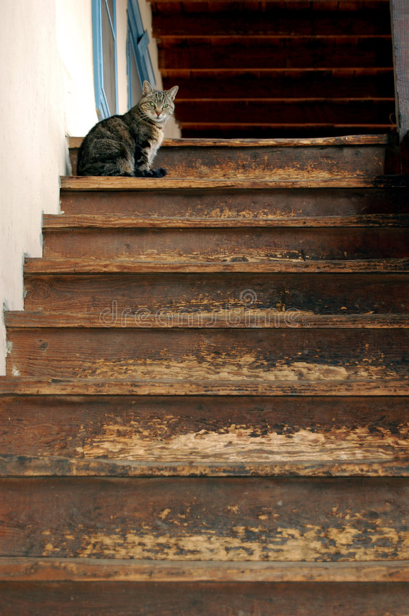 Kitty on the Top Step. Gray cat sitting at the top of an outside staircase stock images