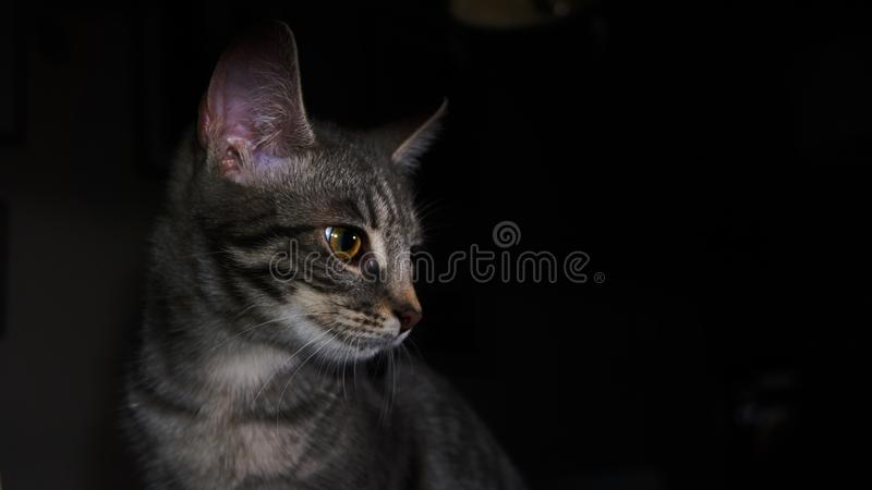 Put lights at that cat! royalty free stock photo