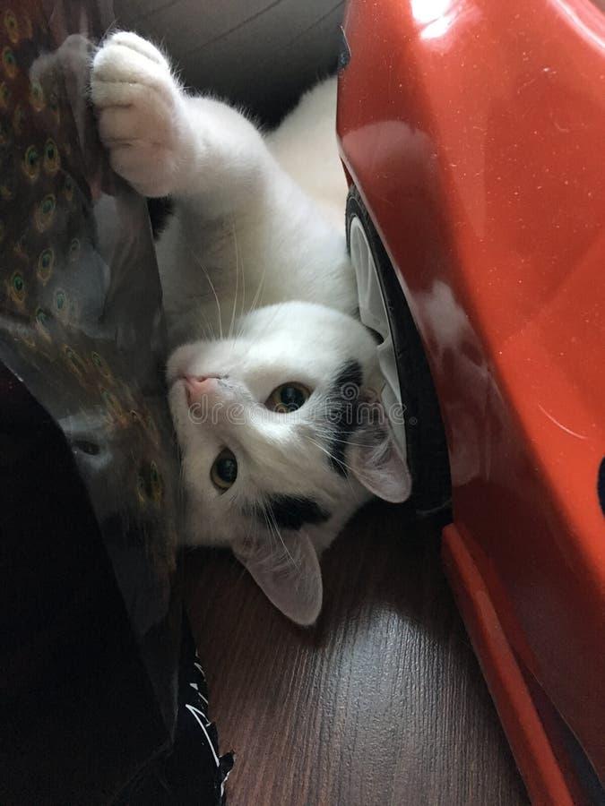 kitty royalty-vrije stock fotografie