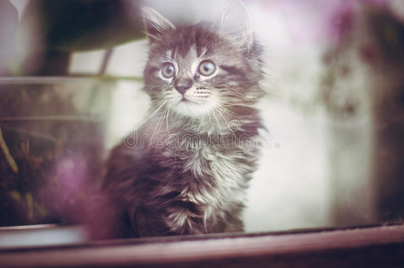 Kitty in the window royalty free stock images