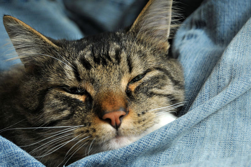 Kitty wrapped up in jeans stock photo