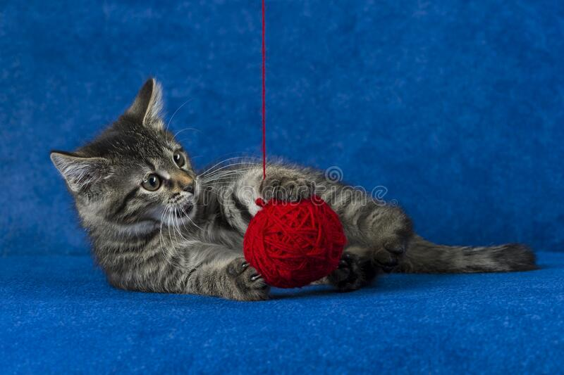Kitty with yarn ball royalty free stock images