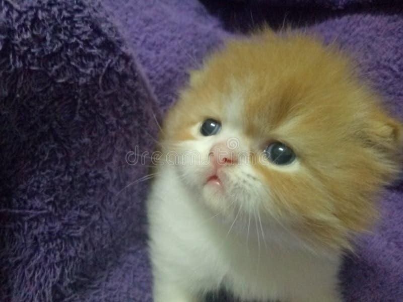Kittycat 免版税库存照片