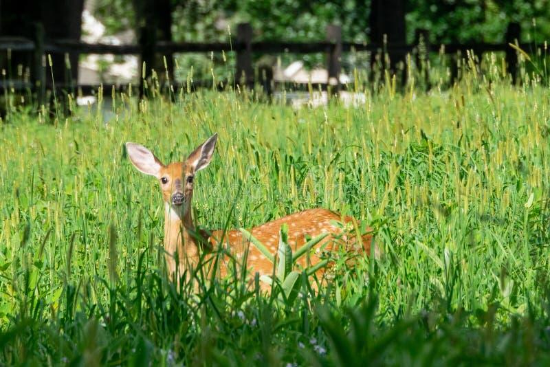 Kitz in der Rasenfläche lizenzfreies stockfoto