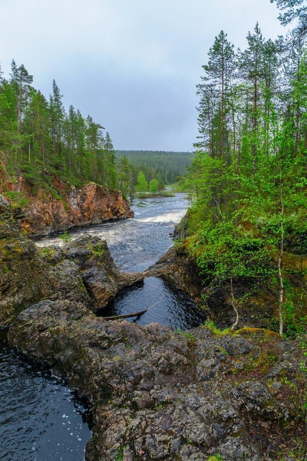 Kiutakongas gwałtowni w Oulanka parku narodowym, Finlandia obraz stock