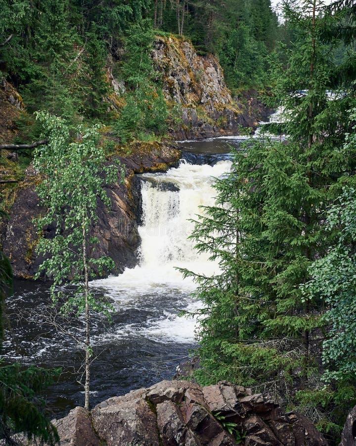 Kivach秋天,卡累利阿 在狂放的北自然的美丽的瀑布在针叶树中 免版税库存图片