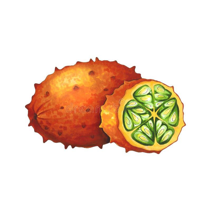 Kiwanofruit op een witte achtergrond Schets in alcohol wordt gedaan die marke royalty-vrije illustratie