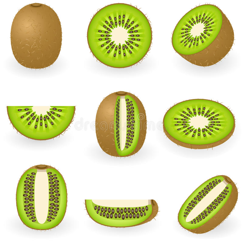 Kiwi vector illustratie