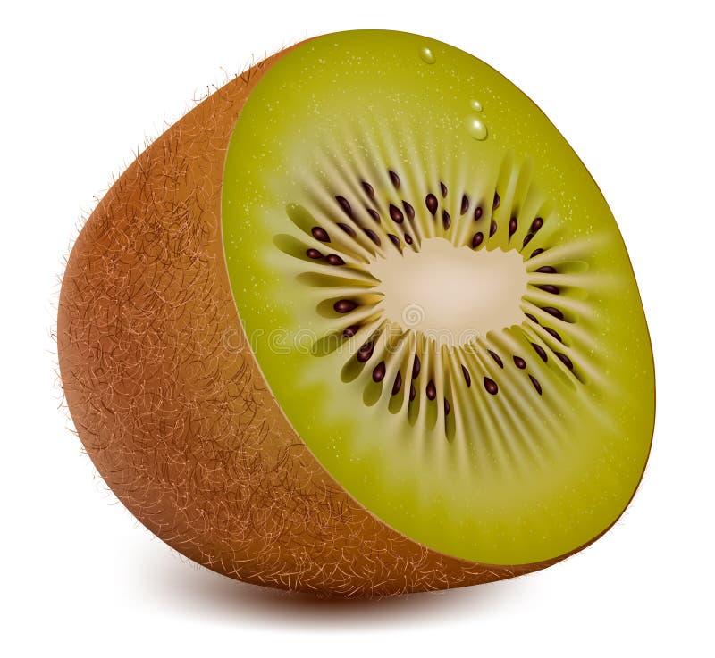 Kiwi. vektor abbildung