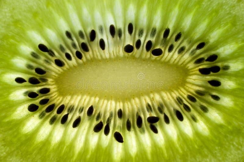 Kiwi immagine stock libera da diritti