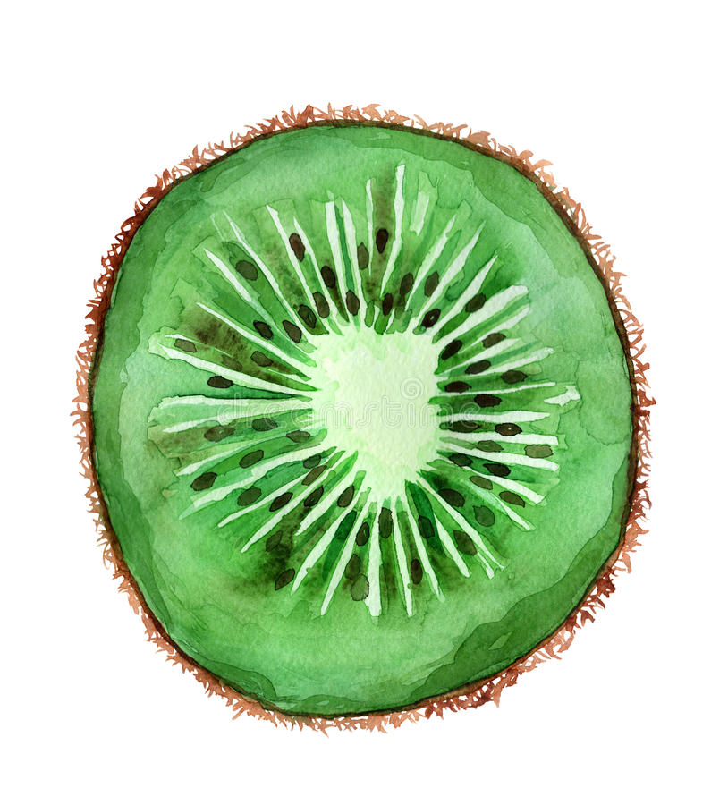 Kiwi stock illustratie
