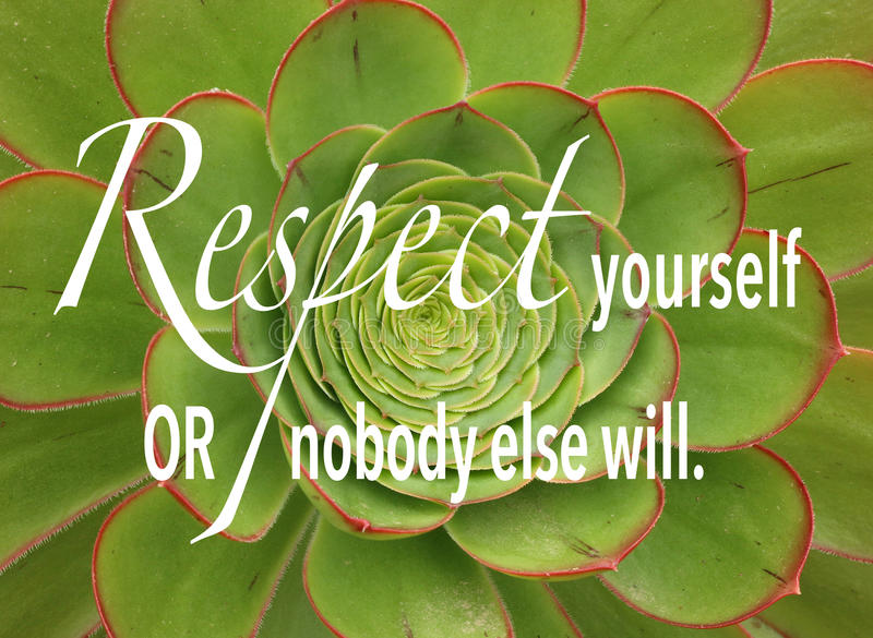 Kiwi Aeonium, a green and red succulent plant with quote. Kiwi Aeonium, a green and red succulent plant with inspirational quote royalty free stock photo