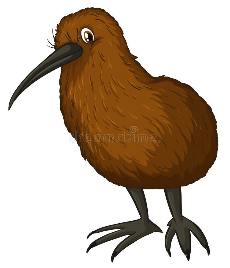 Kiwi Bird stock illustratie