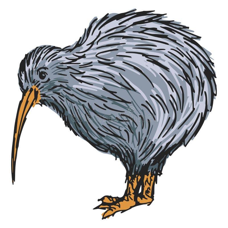 Line Drawing Kiwi : Kiwi bird stock vector illustration of nature