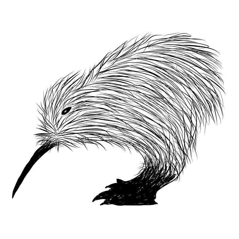 Kiwi Bird Vector illustrazione vettoriale