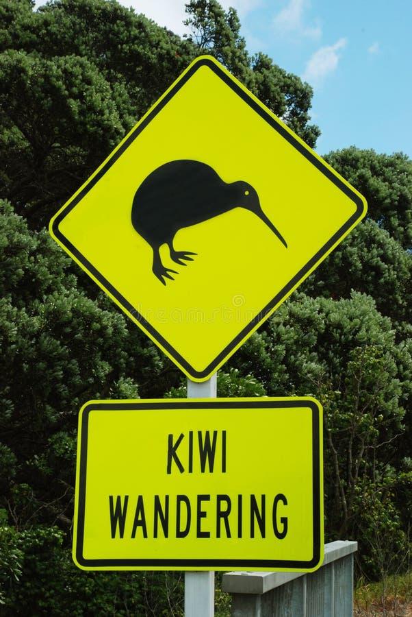 Kiwi che vaga fotografie stock