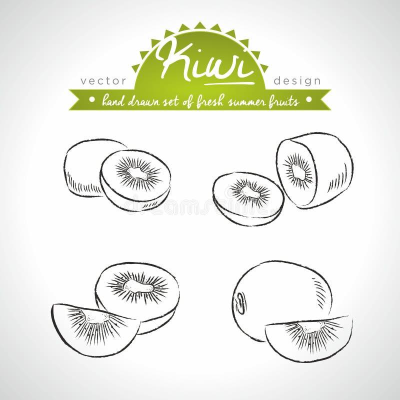 Kiwi Collection des fruits frais avec la feuille Illustration de vecteur D'isolement illustration de vecteur