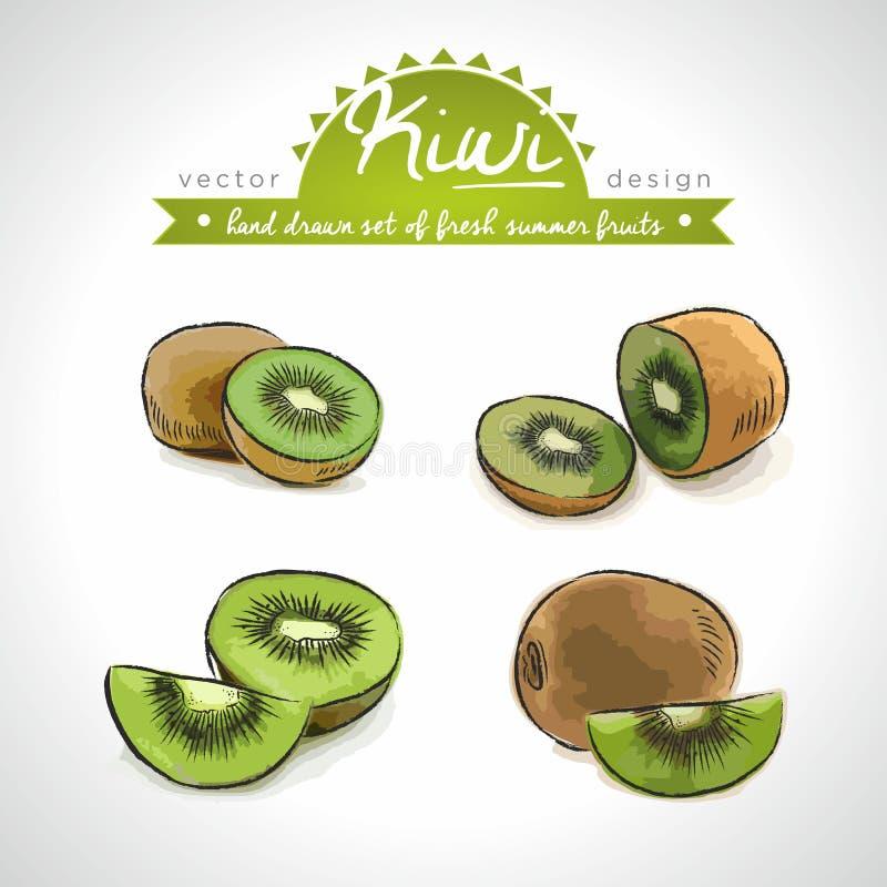 Kiwi Collection tirée par la main de vecteur d'illustration de fruits frais de croquis D'isolement illustration libre de droits