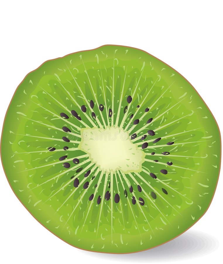 kiwi de fruit illustration libre de droits