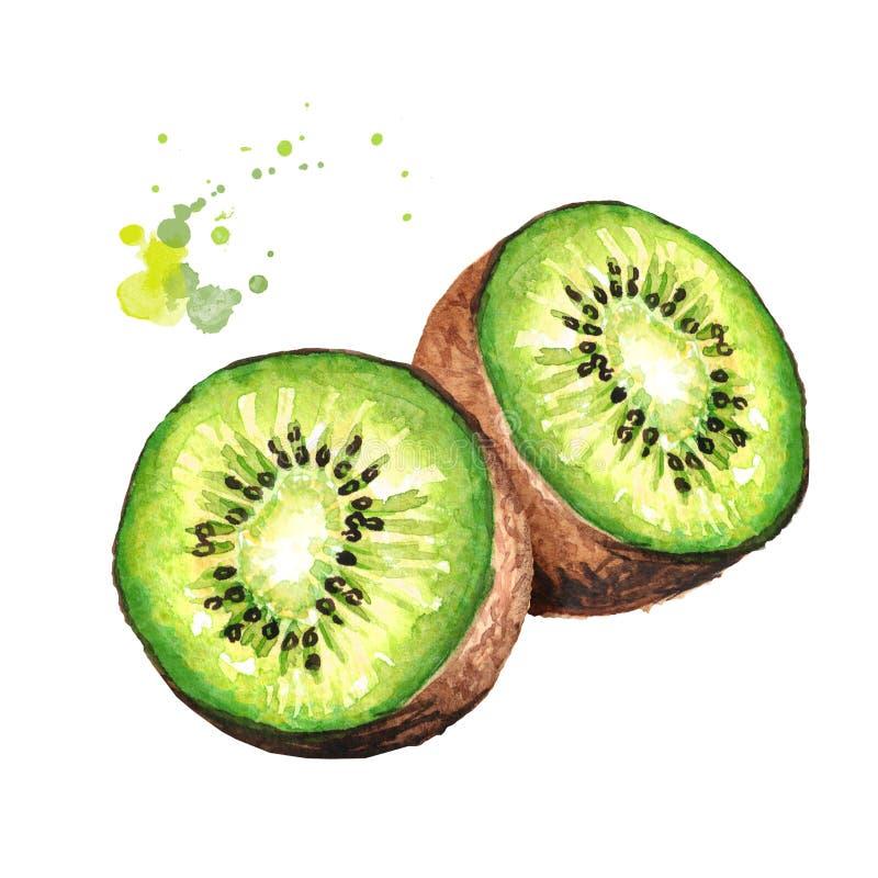 kiwi de fruit mûr Illustration tirée par la main d'aquarelle d'isolement sur le fond blanc illustration libre de droits