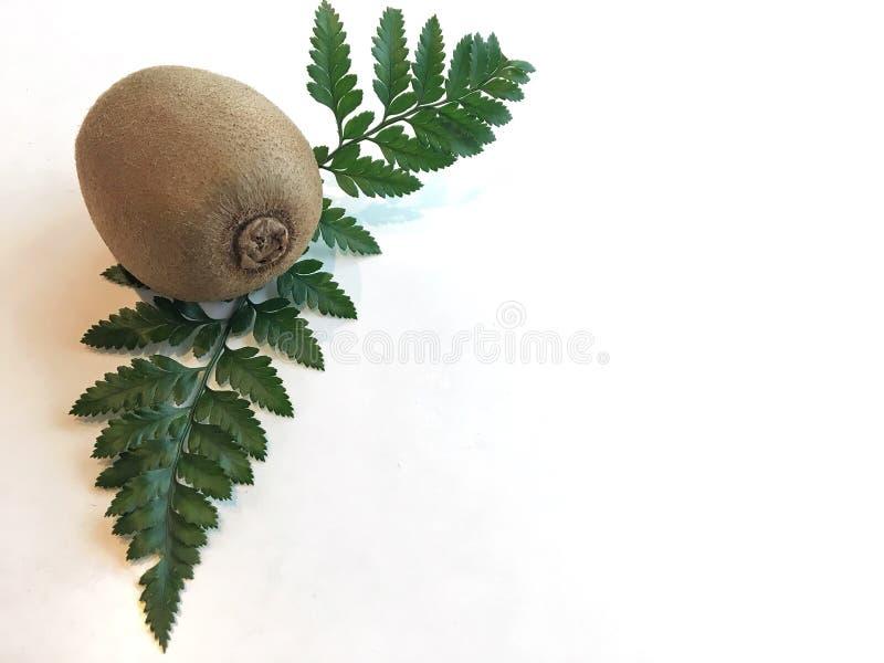 Kiwi en blad royalty-vrije stock foto