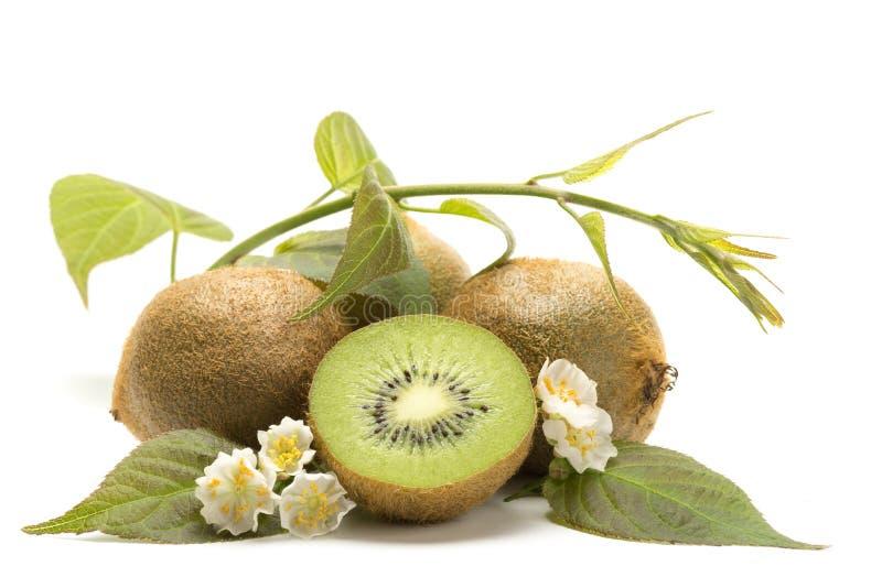 Kiwi, fleurs et feuilles photos libres de droits