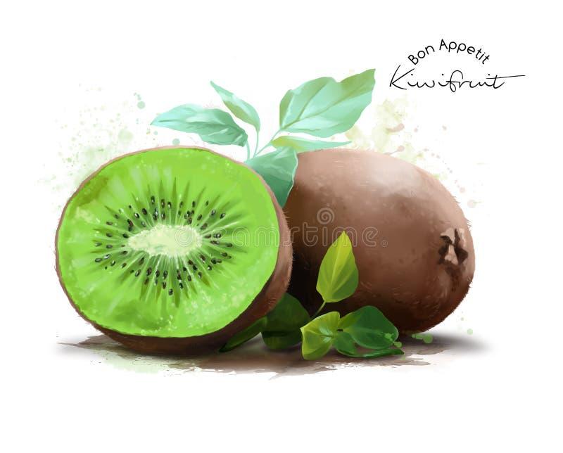 Kiwi fruit and watercolor splashes royalty free illustration