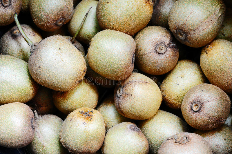 Download Kiwi fruits stock photo. Image of nature, diet, juicy - 26879518