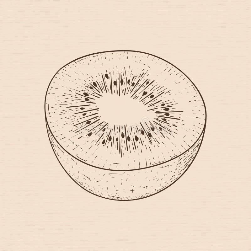Kiwi Hand gezeichnete Skizze lizenzfreie abbildung