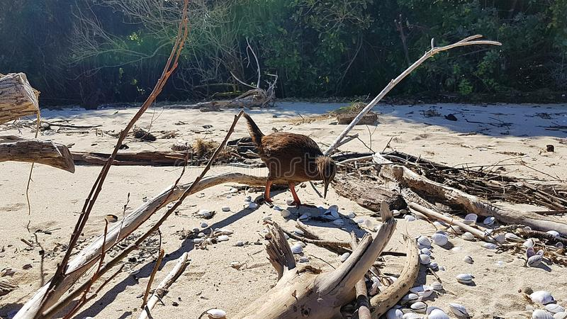 Kiwi in Neuseeland auf Roadtrip in Abel Tasman National Park lizenzfreie stockfotografie