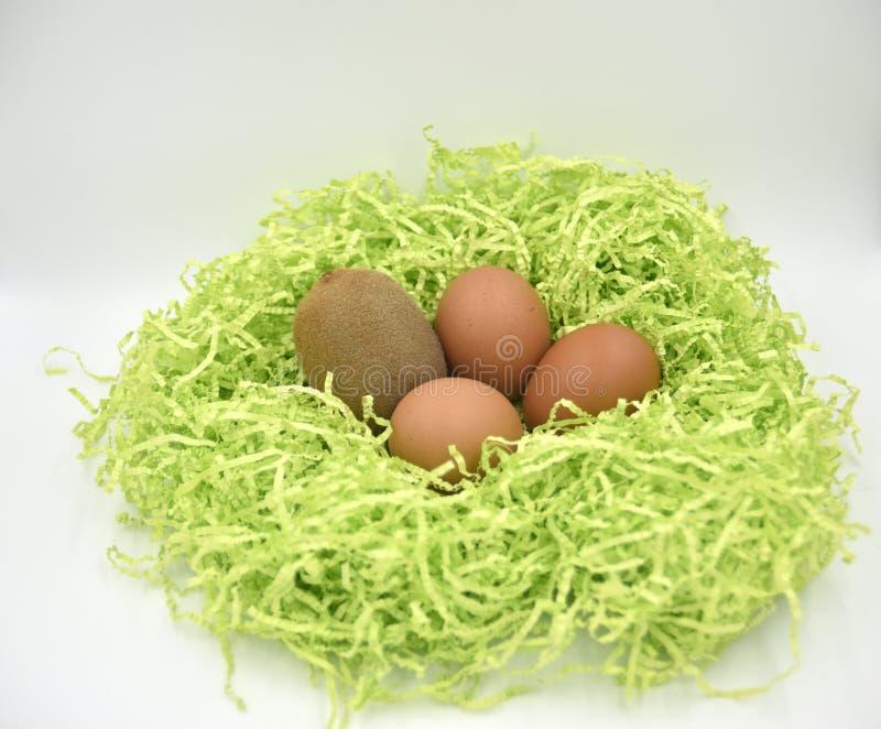 Kiwi owoc z jajkami w zielonego papieru gniazdeczku na białym tle zdjęcie stock