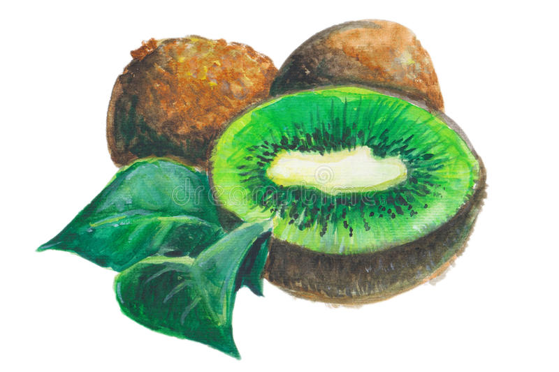Kiwi. Watercolor illustration of a green tropical kiwi fruit royalty free illustration