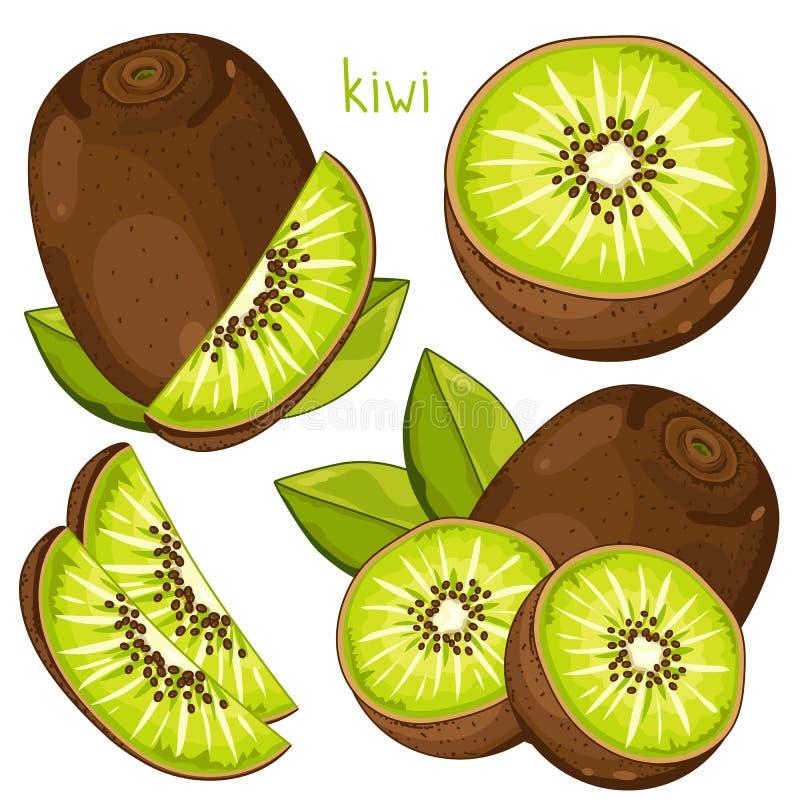 Kiwi, wektor ilustracja wektor