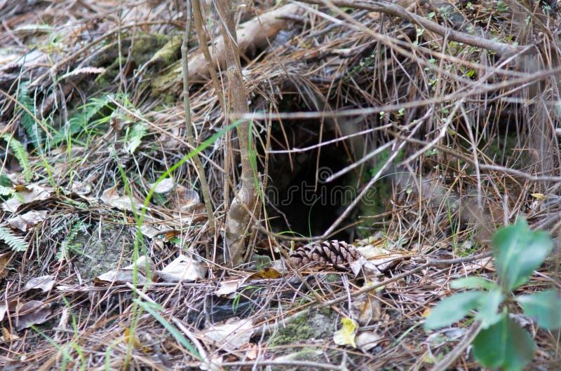 Kiwifågellivsmiljö arkivbilder