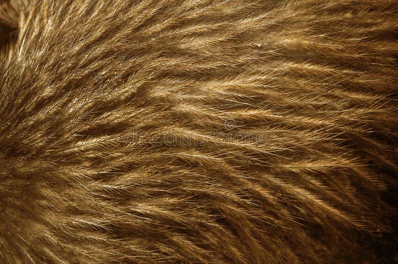 Kiwifedern stockfoto
