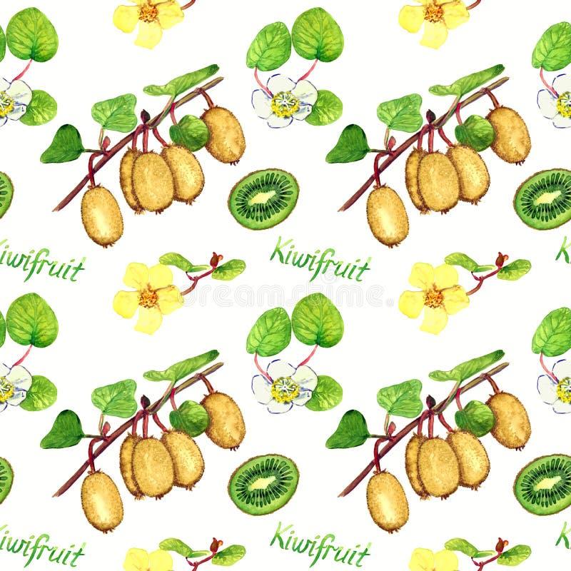 Kiwifruit rozgałęzia się z dojrzałymi owoc, samiec i żeńskimi kwiatami, rżnięta połówka z inskrypcją, biały tło ilustracja wektor