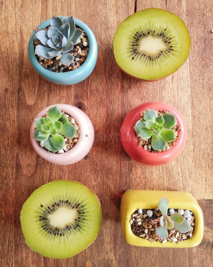Kiwis och cactus royaltyfri fotografi