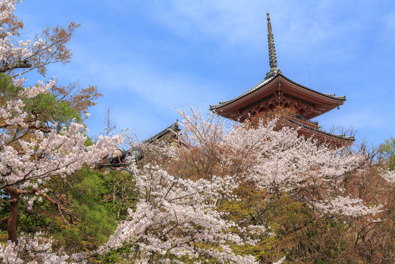 Kiyomizu寺庙和樱花在京都 免版税库存图片