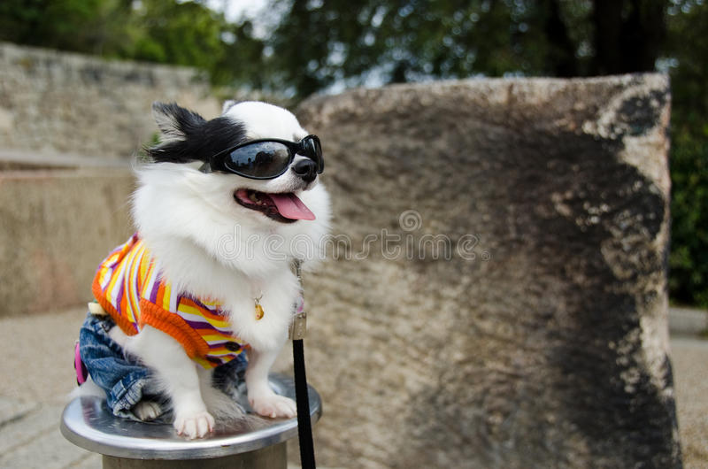 kläderhund royaltyfria bilder