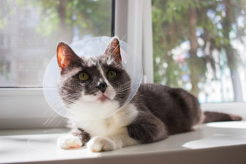 Kläglicher grauer Katzenpatient stockbild