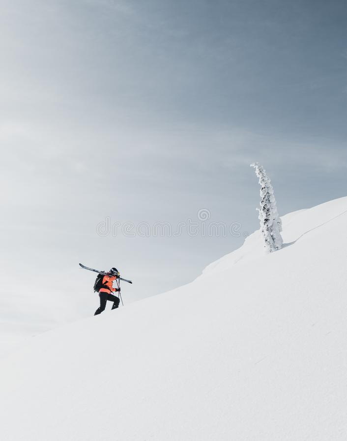 Klättra i berg att gå upp längs ett snöig berg med skidar i ryggsäcken Skidåkare på klättraspåret för freeride-nedstigning fotografering för bildbyråer