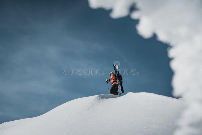 Klättra i berg att gå upp längs ett snöig berg med skidar i ryggsäcken Skidåkare på klättraspåret för freeride-nedstigning royaltyfri bild
