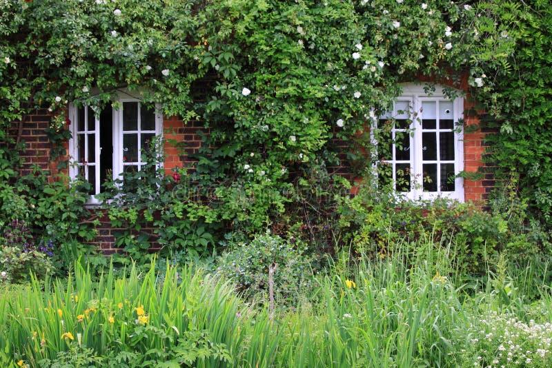klättra rose fönster royaltyfria foton