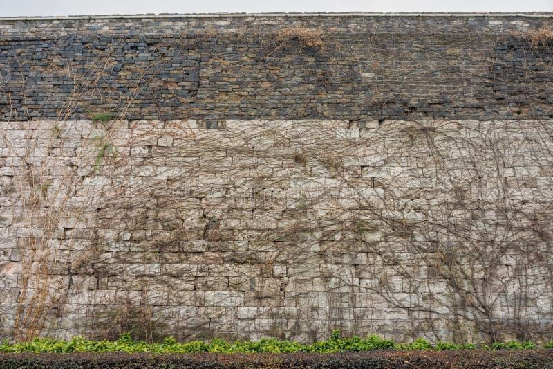 Klättra växter på väggen för Nanjing stadssten arkivfoto