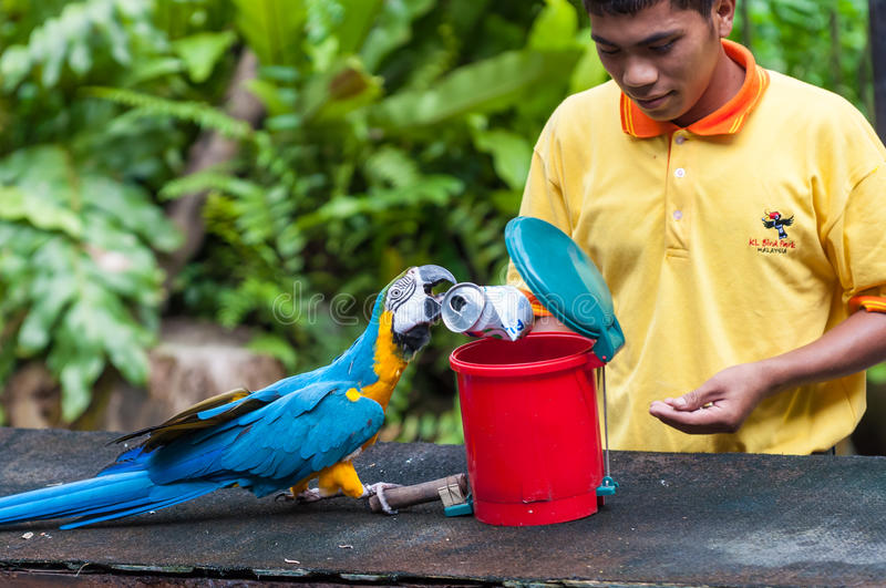 KL Bird Park. A blue and yellow macaw cleans up trash at the KL Bird Park on December 27, 2013 in Kuala Lumpur, Malaysia stock photography