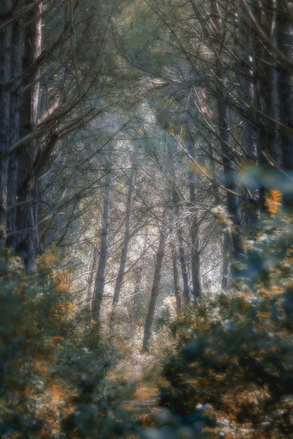 Kl?rung in einen Wald, in dem Sonnenlicht durch die Niederlassungen und etwas Dunst in der Luft gl?nzend ist stockbilder