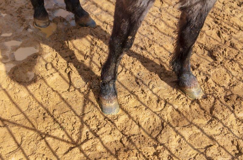 Kl?var av ett djur p? sand i en zoo royaltyfria foton