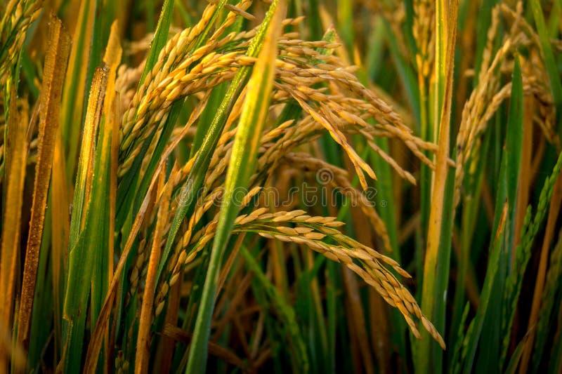 Klaar voor oogst stock fotografie