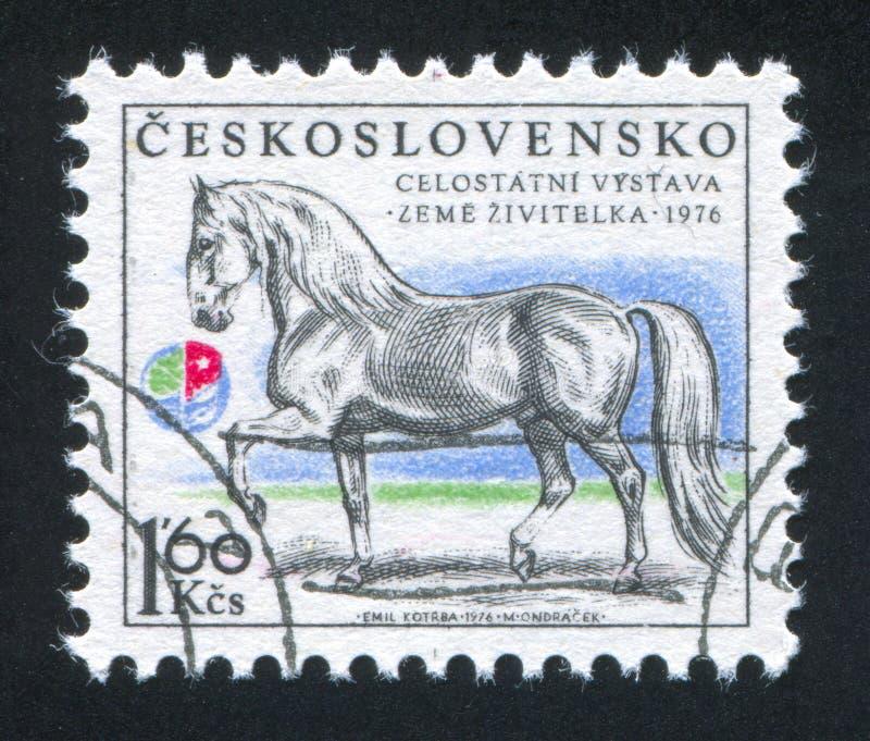 Kladruby-Hengst Generalissimus lizenzfreies stockbild
