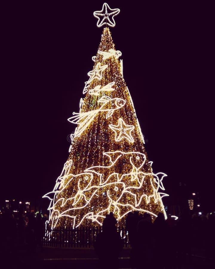 The Christmas Eve stock photography